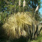 colac-botanical-gardens-3
